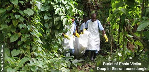 Ebola Jungle Burial - ALLOW IMAGES